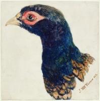 JMW Turner Cock Pheasant-1000px.jpg