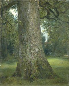 Constable's Elm