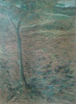 Tree in Villa Borghese, coloured pastels on yellow paper.