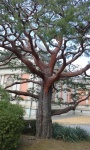 A tree in the garden of the National Museum .