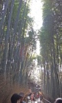 Bamboo forest (3).