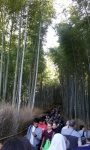 Bamboo forest (4).