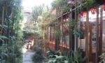 Bamboo garden.