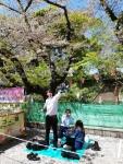 picnic under cherry trees (1).