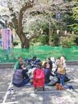 picnic under cherry trees (3).