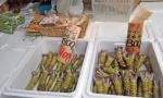 fish market (2).