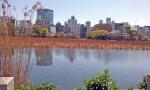 Pond, Ueno park.