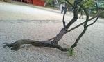 reclined tree.