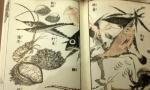 Hokusai Manga_Fish.