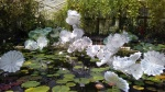 Ethereal White Persian Pond.