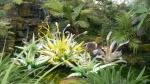 Fiori Verdi (green flowers).