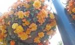 flowers 1.