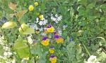 flowers 6.