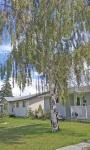 Trees  2.