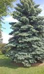 Trees  3.
