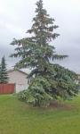 Trees  5.