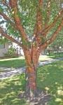 Trees  6.