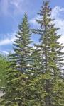Trees 1.