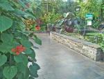 Butterflies' garden 1.