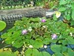 Butterflies' garden 2.