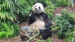 Panda 1.
