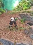 Panda 2.