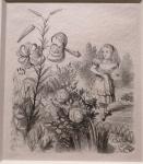 J.Tenniel, Garden of live flowers.